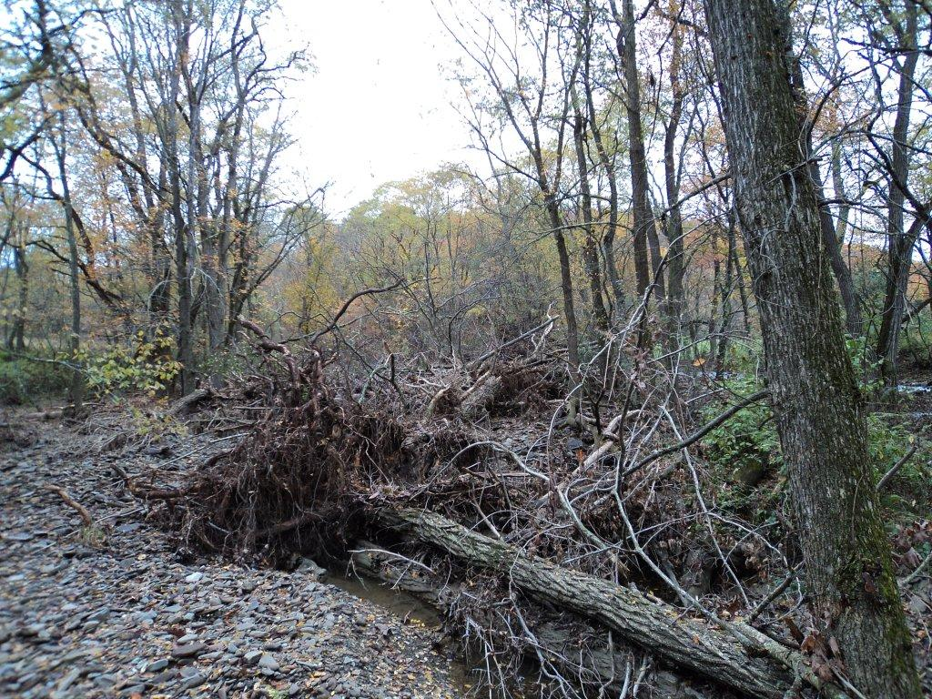 How to Restore a Creek