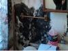 401-church-st-bathroom-suspected-black-mold-2